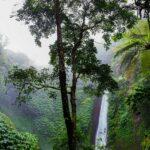 random-jungle-bild-1